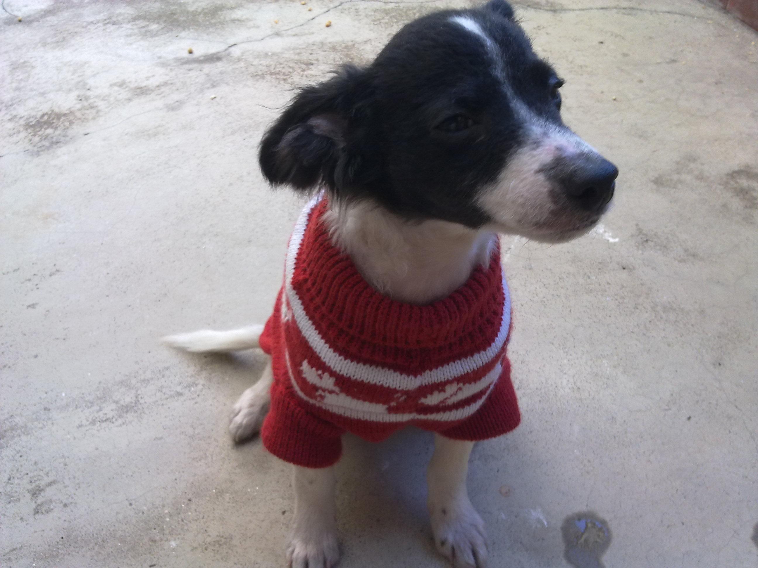 Rondeli, o cão